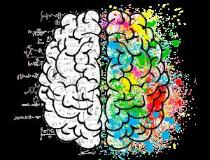 Logisk og kreativ hjerne halvdele